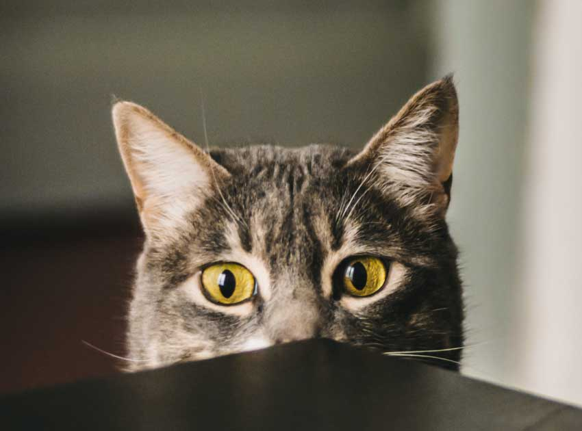 猫の目やにが白いけど大丈夫?
